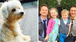 Família de Neil Patrick Harris adota cachorrinha e consegue ficar ainda mais fofa