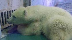 Ativistas exigem que 'urso mais triste do mundo' seja resgatado de shopping
