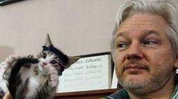 O gato de Julian Assange está fazendo o maior sucesso na