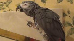 ASSISTA: Papagaio imita som de água direitinho. Isso é muito 'Black