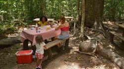 Parque Nacional do Pau Brasil é aberto pela primeira vez em 16