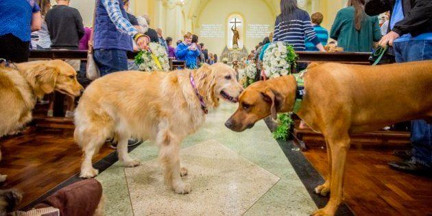 Cães roubam a cena em missas católicas no dia de São Francisco de Assis, padroeiro dos