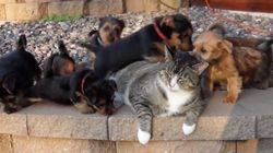 ASSISTA: Filhotes atacam com amor gato mais paciente do