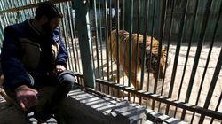 TRISTEZA: Zoológico de Gaza coloca à venda animais passando