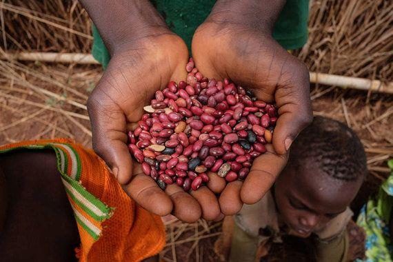 ONU alerta sobre desperdício de comida que custa US$ 1 trilhão por
