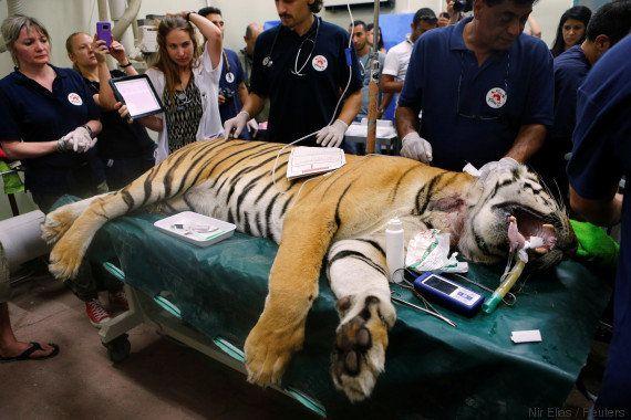 ONG resgata animais e fecha 'pior zoológico do mundo', em