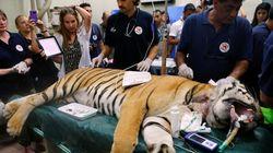 Vitória: ONG resgata animais e fecha 'pior zoológico do