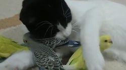 ASSISTA: Este gatíneo tem o maior xodó pelos seus amigos