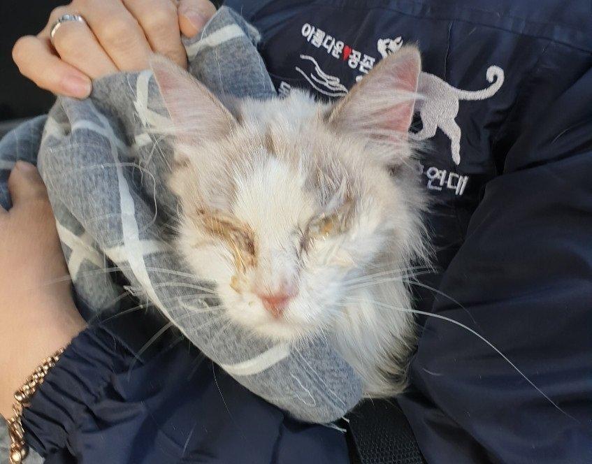 도망간 세입자의 원룸에는 고양이 한마리가 있었다