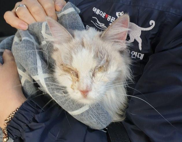 집세 안 내고 도망간 세입자의 원룸에는 고양이 한마리가 있었다