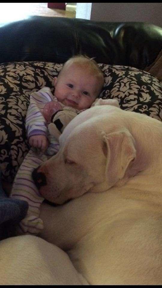아이가 자기 침대에 개를 재우면서 한 행동이