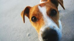 Here's Why Dogs Sniff Your Crotch When You're On Your