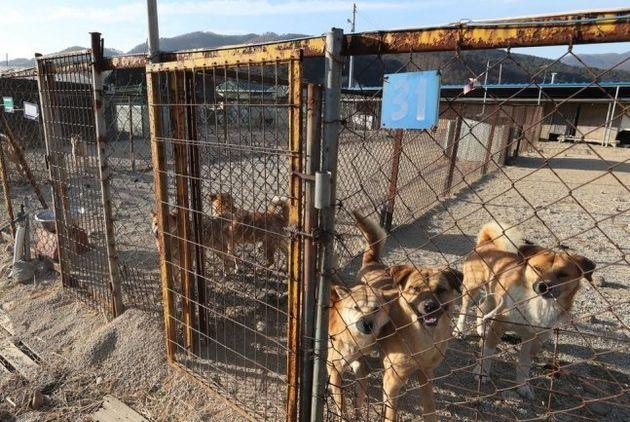 지난해 12월28일 오전 경기도 포천에 위치한 동물보호단체 '케어'의 구조견 보호소