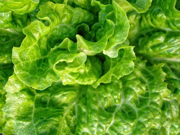 As melhores folhas para saladas, classificadas segundo seu valor nutritivo