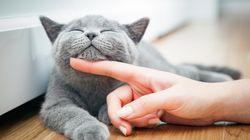 Estes são 10 sinais de que seu gatinho ama