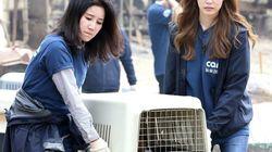 구조 동물 안락사 논란 '케어' 수사를 촉구하는 청와대 청원이