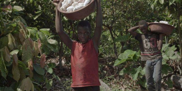 L'enquête sur le cacao et le travail des enfants du dernier