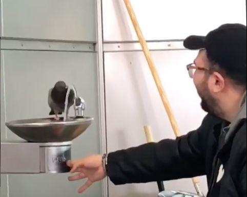 pigeon fountain