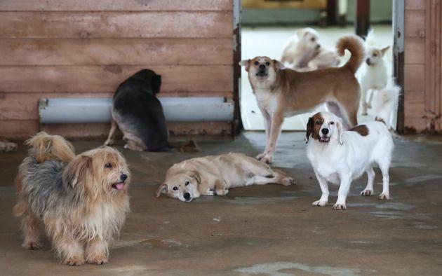 주인한테 버림받는 동물은 한해 10만 마리가