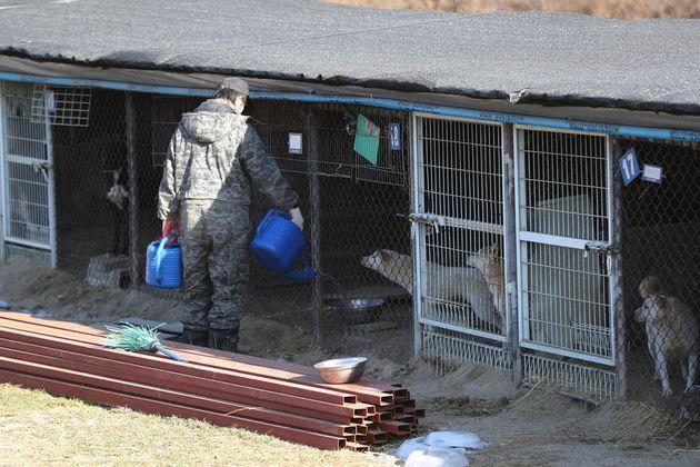 지난해 12월28일 오전 경기도 포천에 위치한 동물보호단체 '케어'의 구조견 보호소 모습.