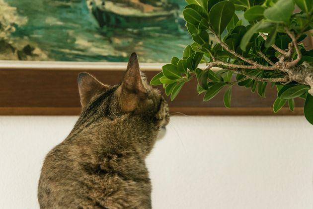 Βρετανία: Γάτα κατέστρεψε σπάνιο έργο τέχνης του 17ου