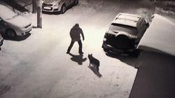 Russe tritt nach Schäferhund und verletzt sich