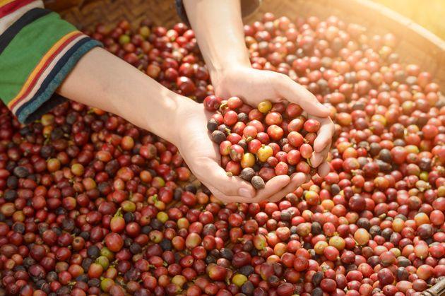 카페 찾은 커피 농부가 울음을 터뜨린