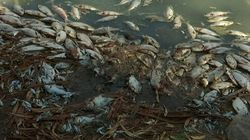 Oxygen To Be Pumped Into Rivers As Fish Die In Australian
