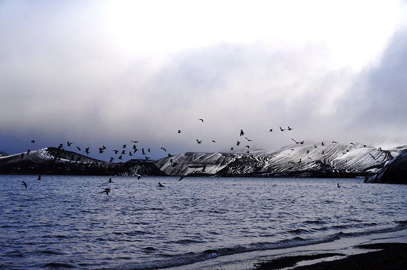 Pictures: My Journey To The Antarctic, Part