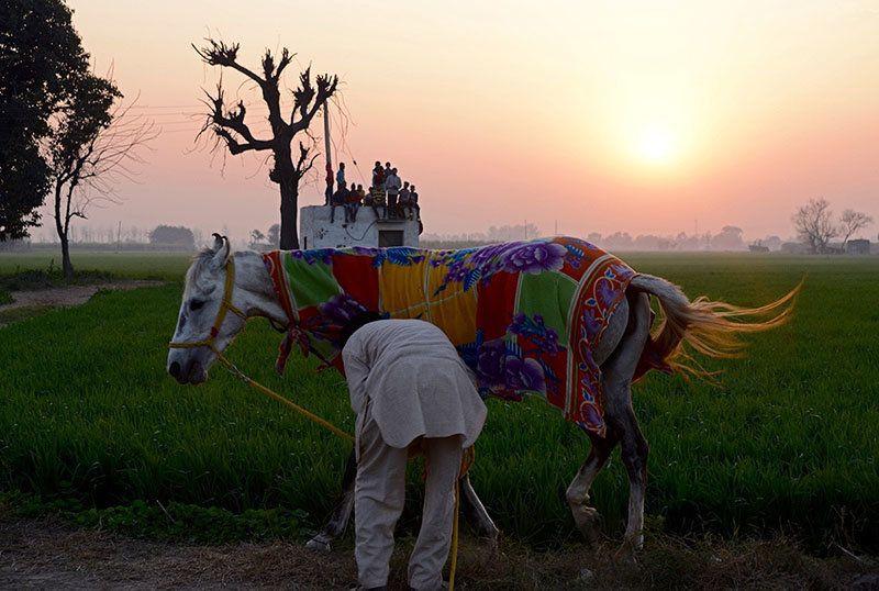Photoblog: The Weird And Wonderful Rural