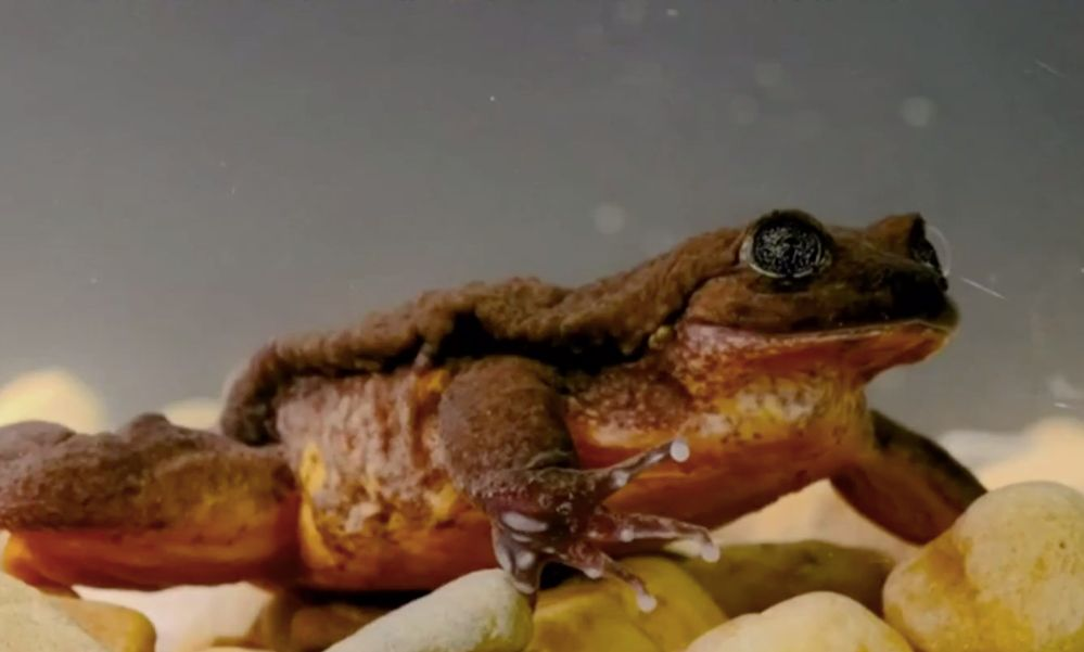 world's loneliest frog may finally get a date