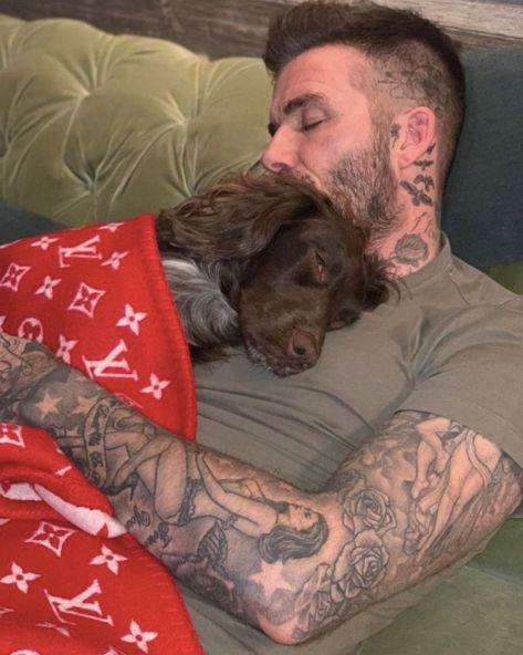 Foto zeigt David Beckham mit seinem Hund –ein Detail löst Empörung