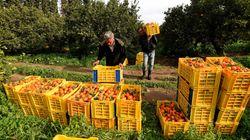 Le déficit commercial alimentaire a enregistré une baisse de 63% en 2018 selon le ministère de