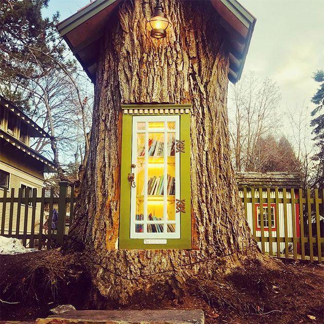 H πιο όμορφη βιβλιοθήκη βρίσκεται σε κορμό δέντρου 110
