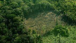 Ação do Ministério do Meio Ambiente contra ONGs ameaça Amazônia e apoio a vítimas da