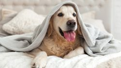 DOG DAYS: Dreading The Incoming Arctic Blast? How To Make The Most Of It, As Illustrated By