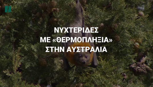 Νυχτερίδες με «θερμοπληξία» στην