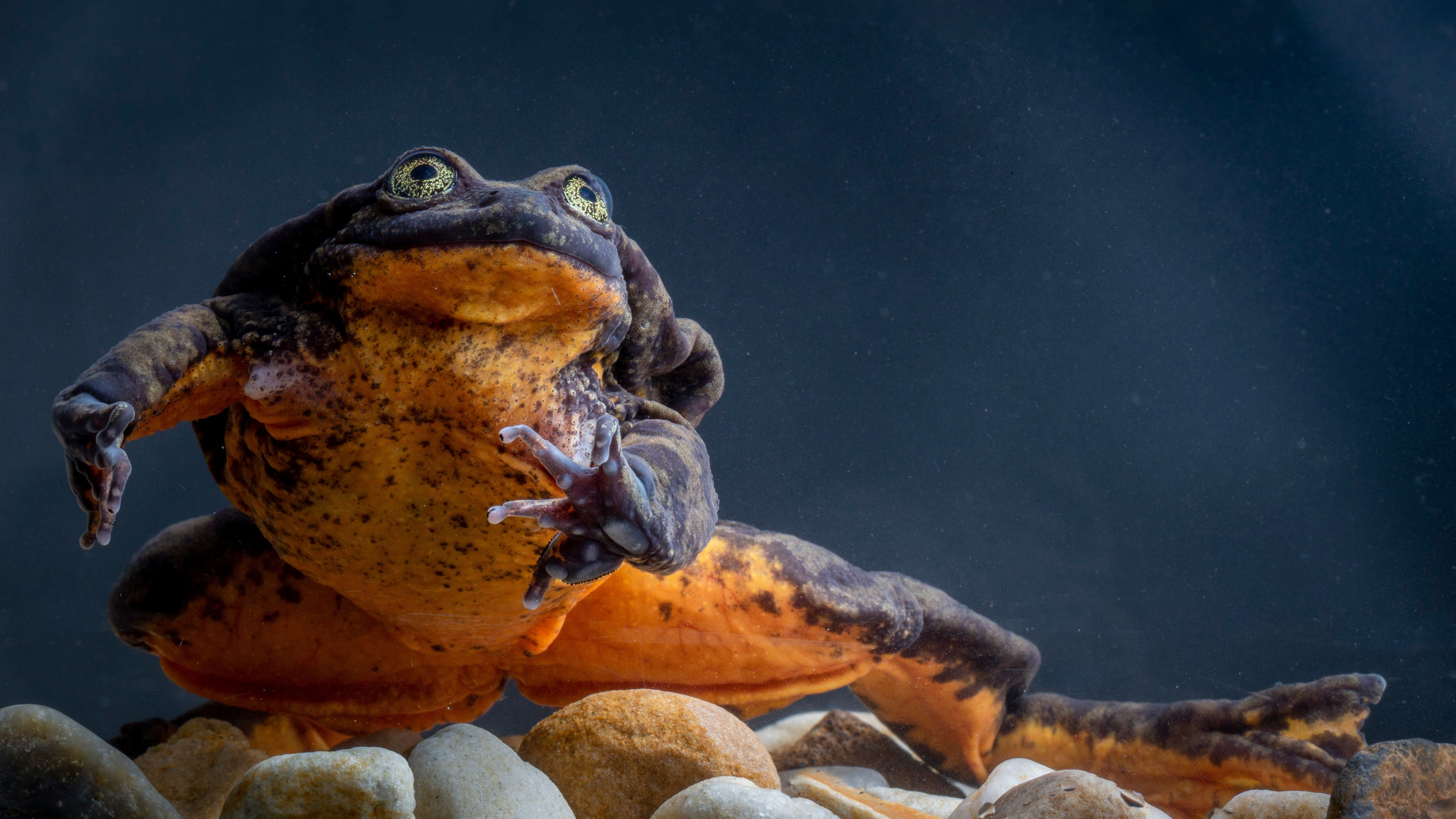 Lonely Frog Romeo Finds His Juliet –Plus 5 Other Cute Animals To End The