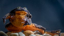 Lonely Frog Romeo Finds His Juliet – Plus 5 Other Cute Animals To End The