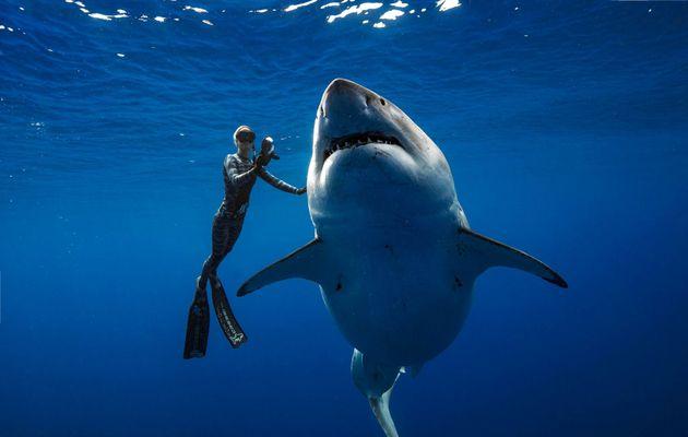 Δύτες κολύμπησαν με έναν από τους μεγαλύτερους καρχαρίες της ιστορίας στη