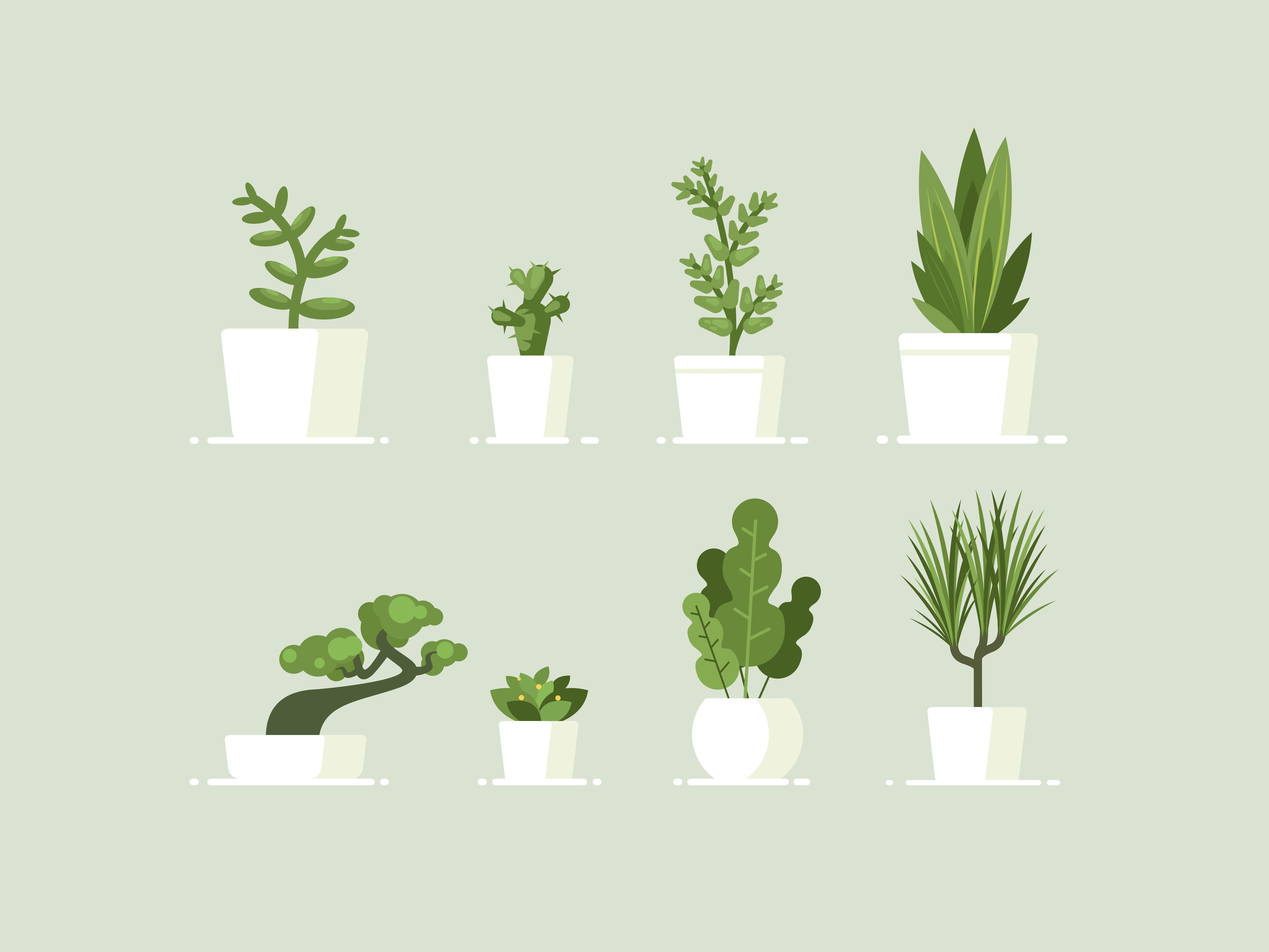 Spider Plant Or Pothos These Are The 5 Best Plants For A Home With Low Light Huffpost Uk Life