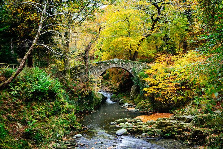 Foley's Bridge in the majestic Tollymore Forest Park.