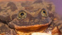 세상에서 가장 외로운 개구리가 10년 만에 짝을