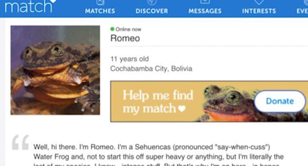 로미오의 매칭 사이트 광고