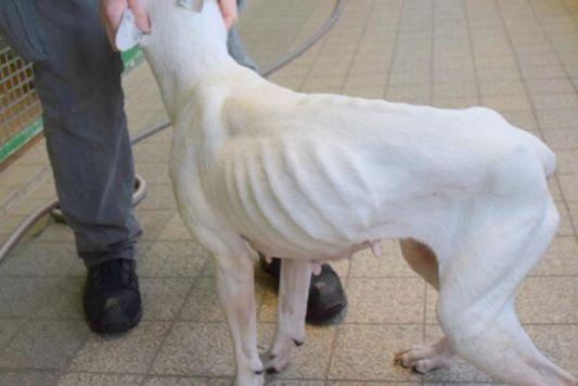 Hund In Ikea Tüte Vor Tierheim Ausgesetzt Besitzerin Zeigt Keine