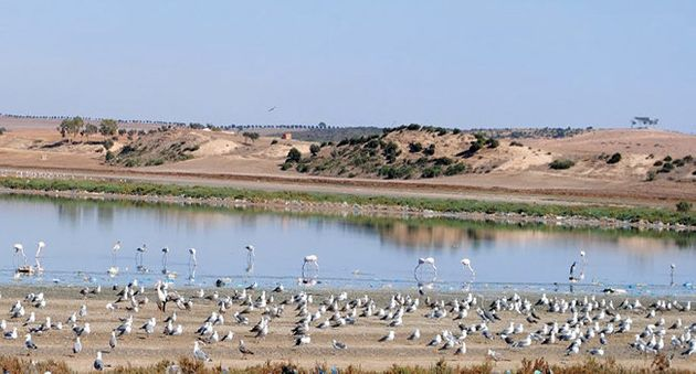 Les déchets industriels menacent le la biodiversité au lac de