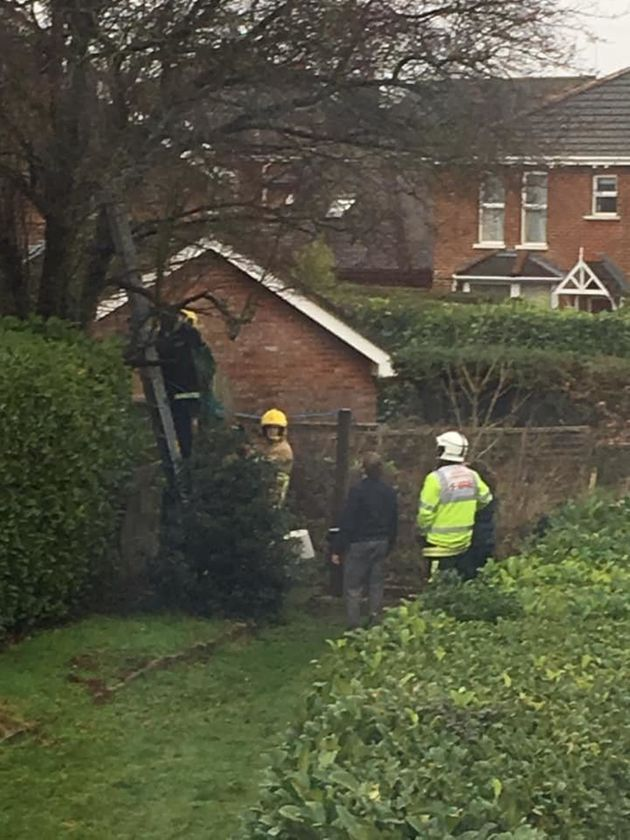 Firefighters Rescue Woman Who Got Stuck Up Tree Trying To Save Her
