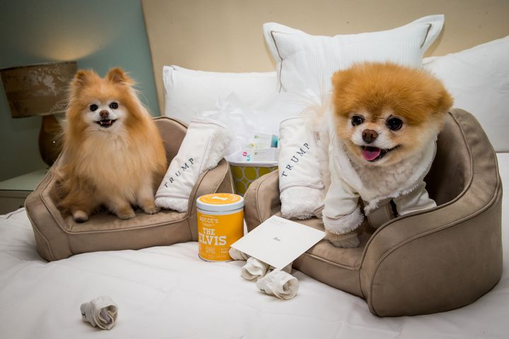 Boo (R) and his best friend, Buddy in 2014 atTrump International Hotel in Las Vegas. Notably, this was before Trump ent