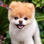 세상에서 가장 귀여운 개가 무지개 다리를