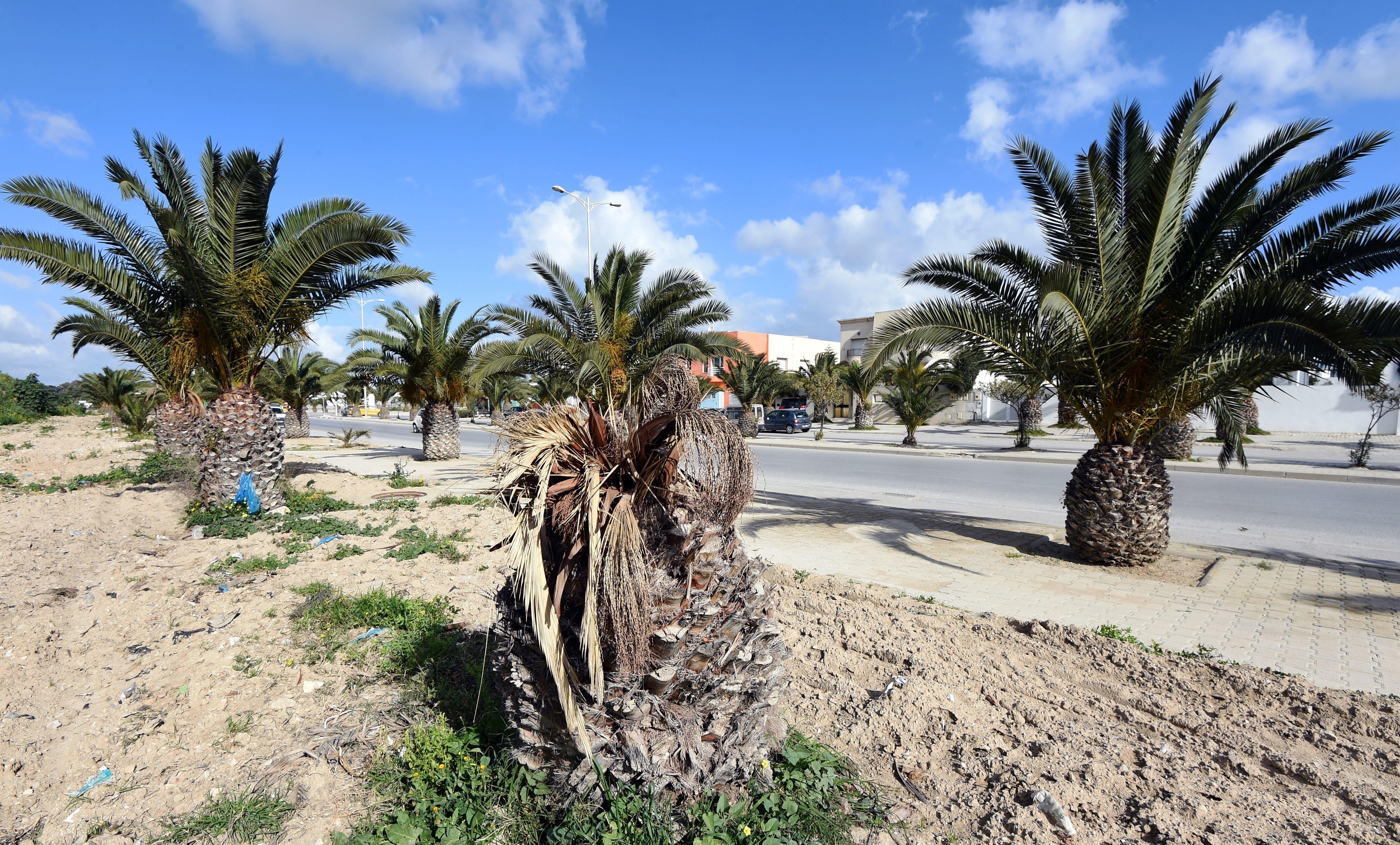 L'éradiction du charançon rouge est quasiment impossible dans la zone méditerranéenne selon